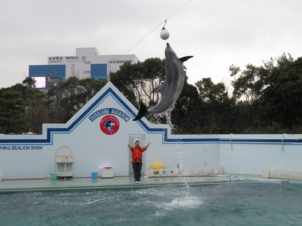 イルカのショーももちろんあります☆