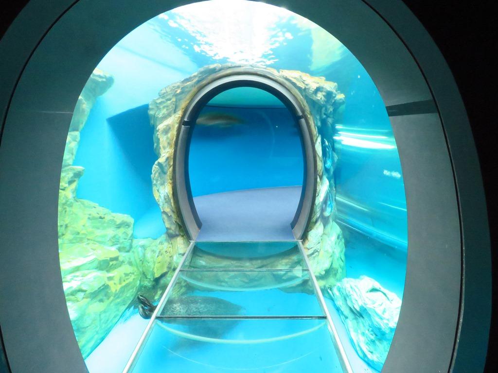 水中トンネルでは、記念撮影を☆