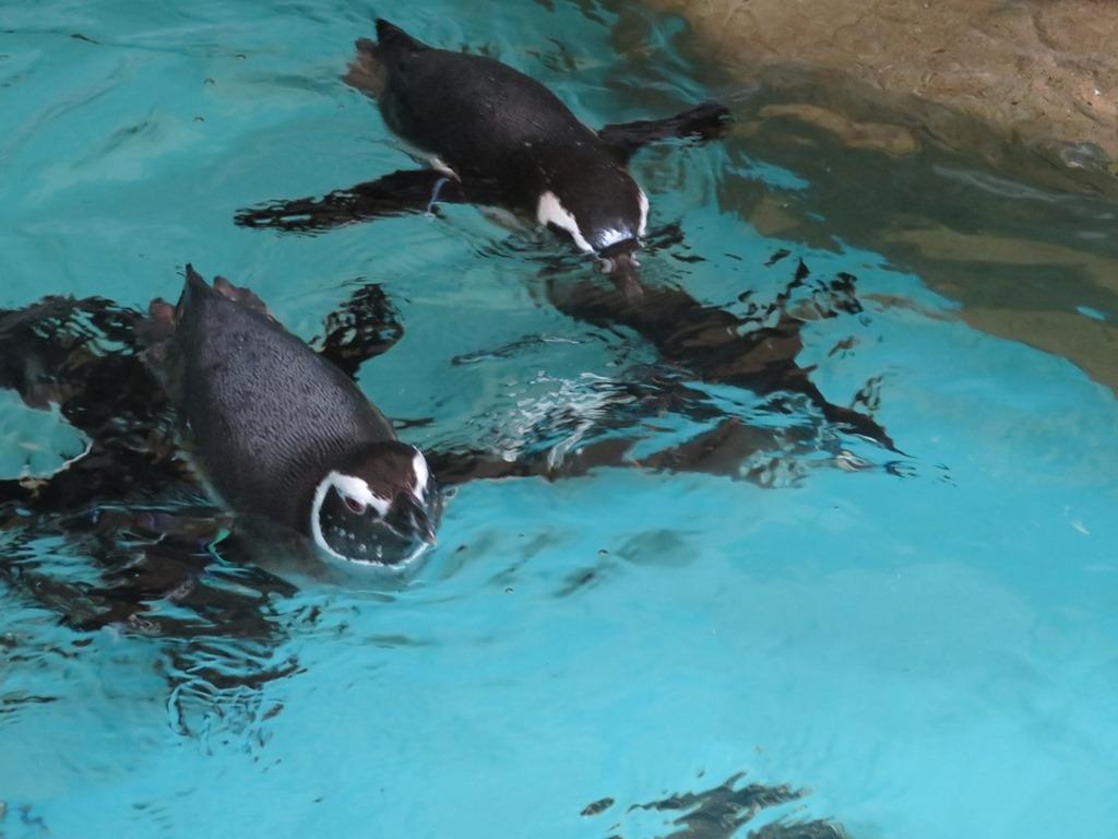 泳いでいる姿もとってもカワイイです☆水中からも見れますよ☆