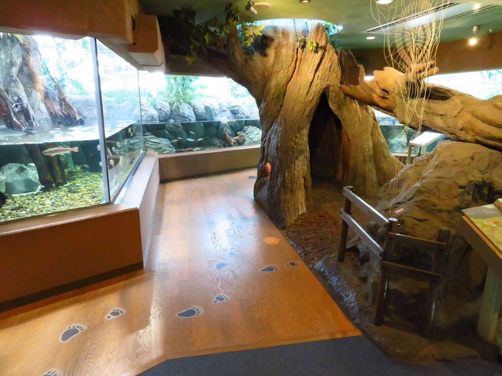 東京湾に注ぐ川コーナー☆魚以外の生きものもいるよ☆
