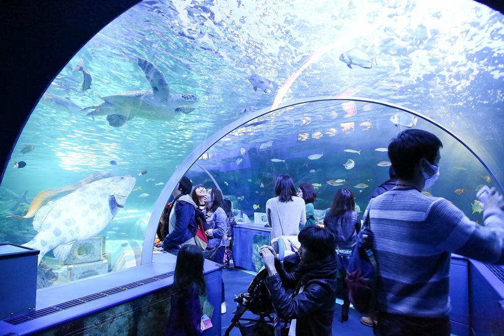 いろんな魚が見れるトンネル水槽は大人気☆