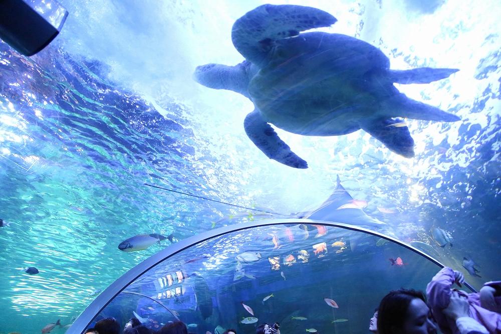 ゆったり泳ぐカメを下から眺めるのはなかなか無い機会ですよ☆