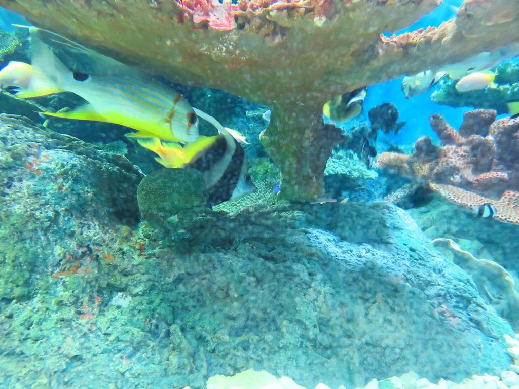 色とりどりのサンゴに群がる魚で癒されます☆