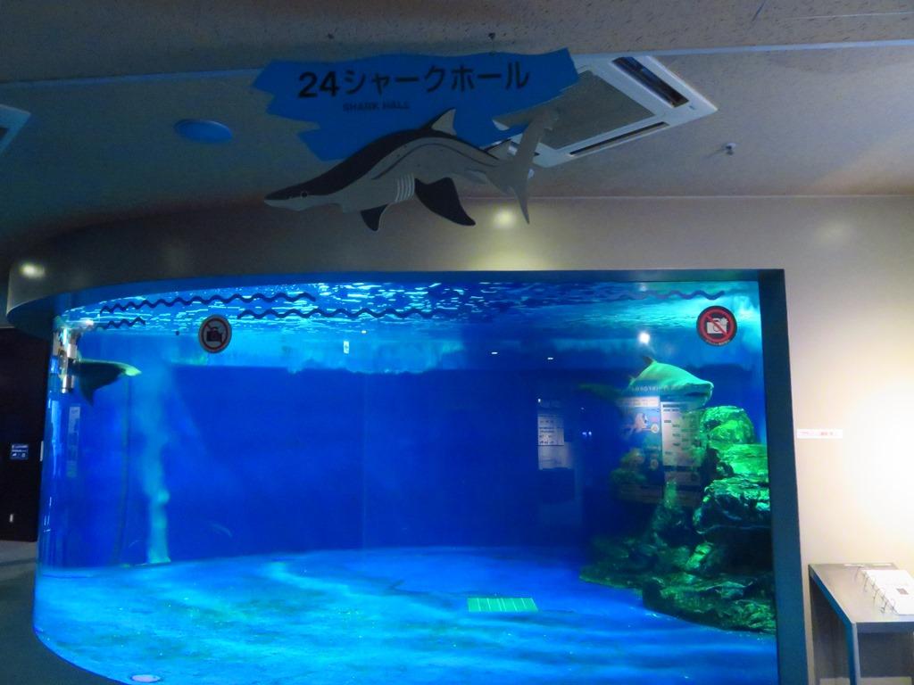 シャークホールには大きなホオジロザメが!!