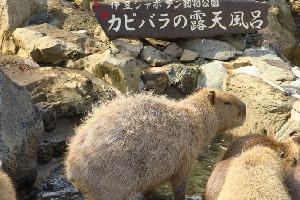 伊豆シャボテン公園(静岡県)