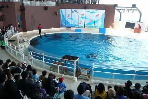 下関市立しものせき水族館 海響館(山口県)