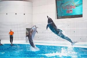 いおワールド かごしま水族館(鹿児島県)