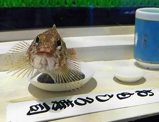 おもしろ水族館 ギャラリー4