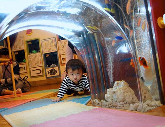 赤ちゃん水族館 ギャラリー9