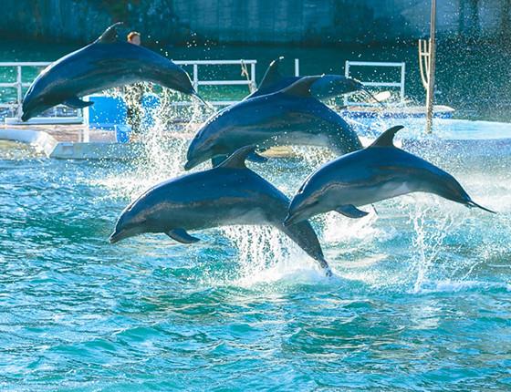 下田海中水族館のおもしろ楽しいショー 写真2