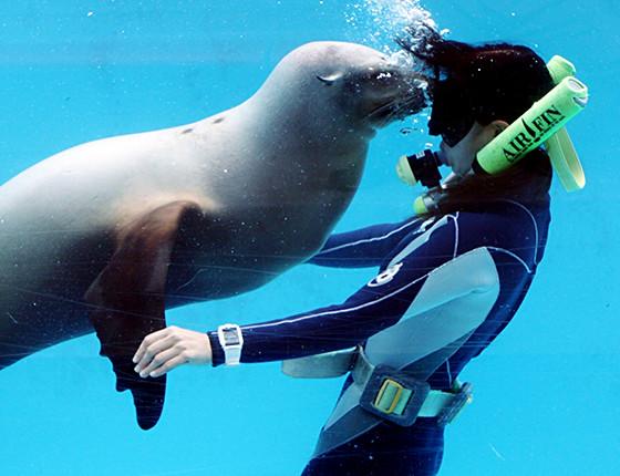 下田海中水族館のおもしろ楽しいショー 写真3