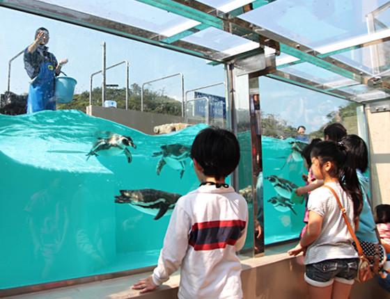 下田海中水族館のおもしろ楽しいショー 写真4
