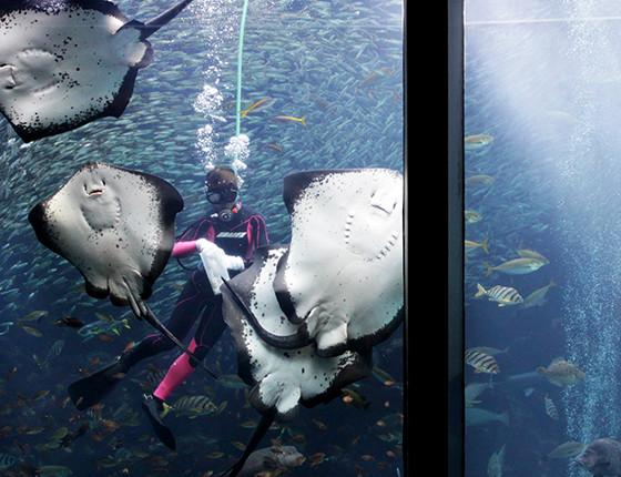 下田海中水族館のおもしろ楽しいショー 写真5