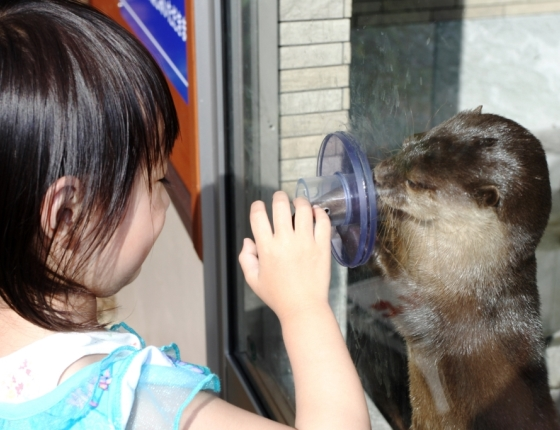下田海中水族館のおもしろ楽しいショー 写真1