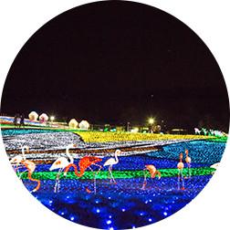 展望台から見る光の「地上絵」