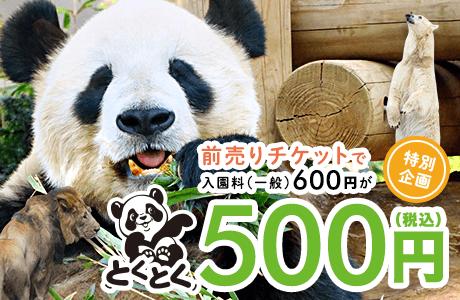 赤ちゃんパンダも話題!上野動物園に行くならママこえ特別プランがオススメ