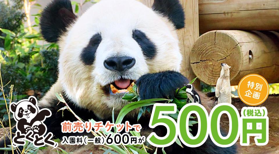 上野動物園の入園割引チケット販売中!お得な前売り券を買って上野動物園へ遊びに行こう!