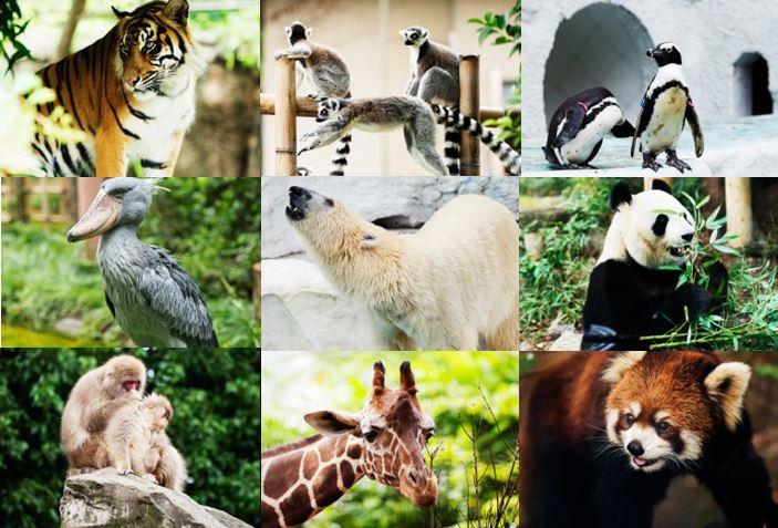 上野動物園に遊びに行こう!