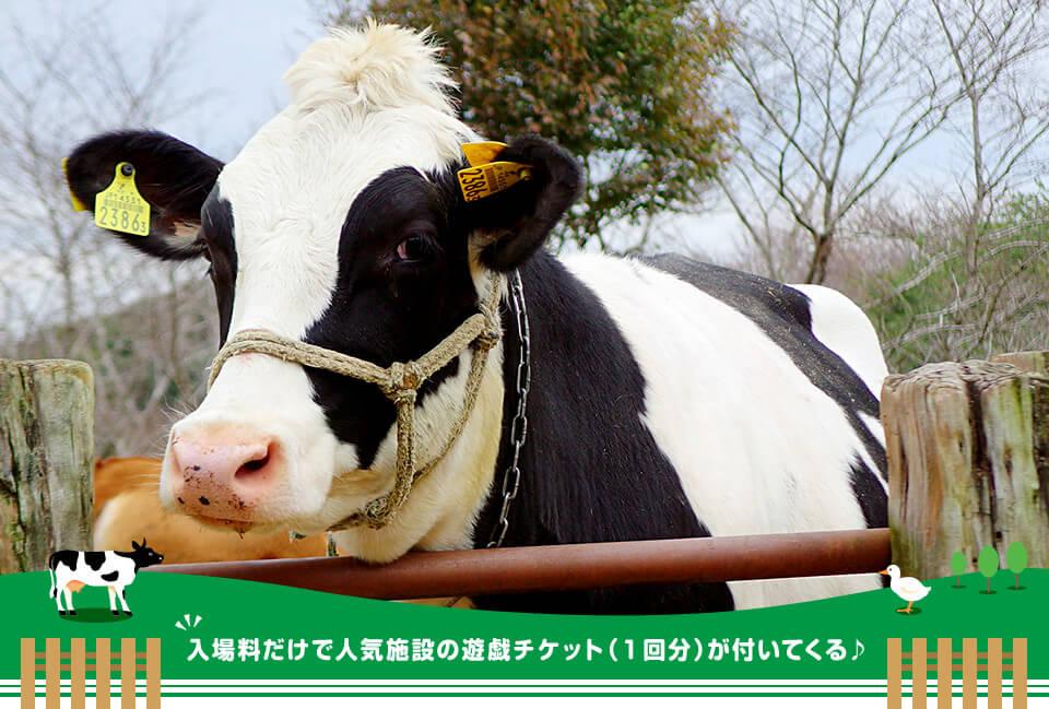 成田ゆめ牧場 入場料だけで人気施設の遊戯チケット(1回分)が付いてくる♪