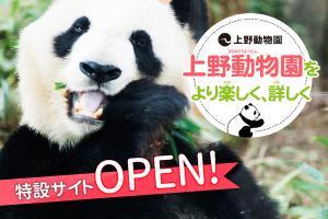 上野動物園はどんなところ?子どもと一緒に上野動物園を動画や写真で学ぼう!