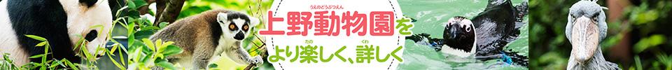 上野動物園をもっと詳しく!上野動物図鑑