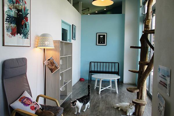 Moff animal cafe