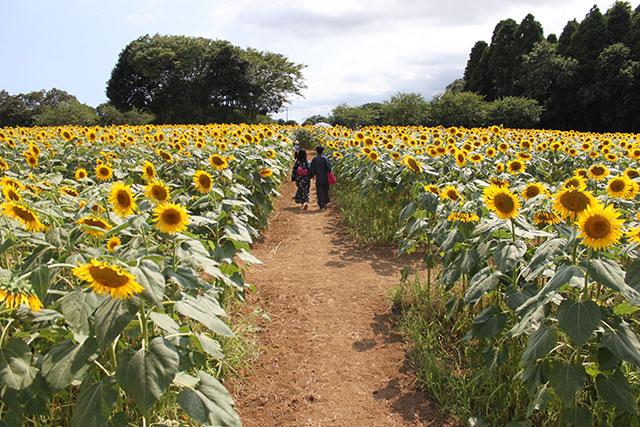 成田ゆめ牧場 photo1