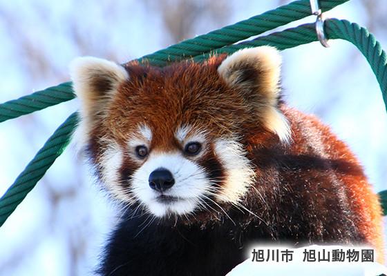 旭山動物園/雪の美術館