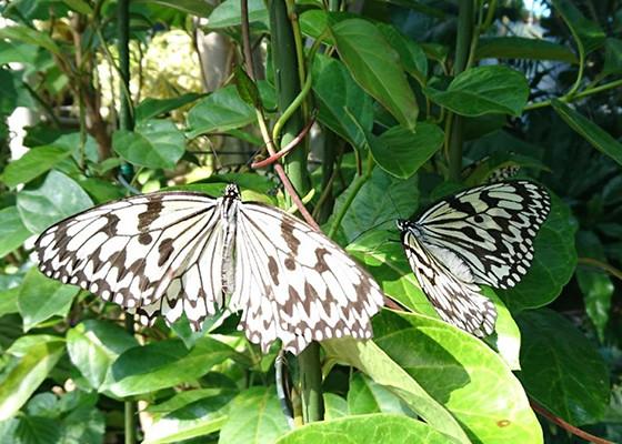 琉宮城 蝶々園