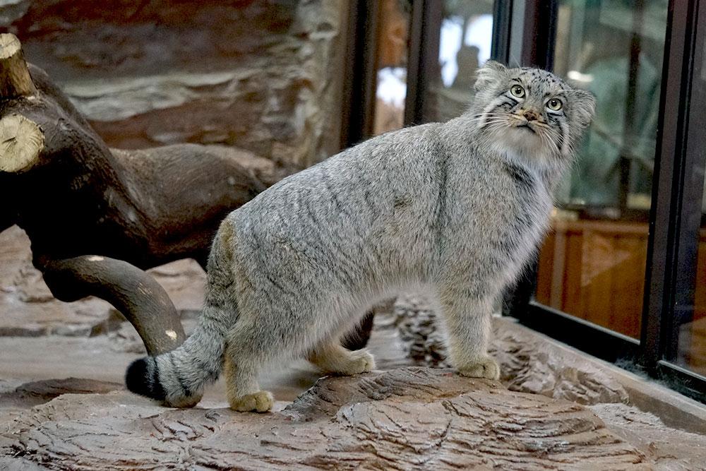 アジアにくらす動物たちの世界