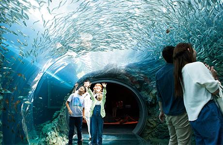 上越市立水族博物館うみがたりチケット