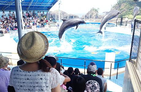 【10%オフ】越前松島水族館の入館チケットが10%オフ