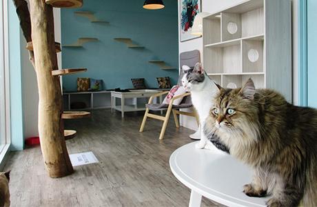 可愛い小動物たちとふれあいを楽しめるアニマルカフェ