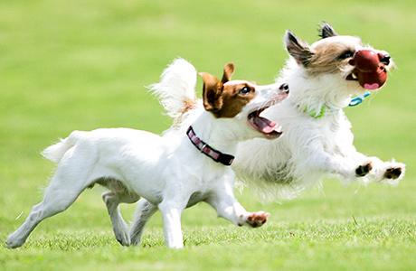 犬と人との絆、人と人との交流、犬と犬の社会化を学べるドッグ・コミュニティパーク