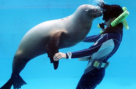 イルカと泳げる水族館・下田海中水族館へお得に行こう!