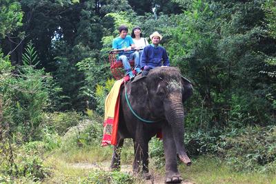 野性味を楽しめる、国内でも数少ないゾウさん乗り