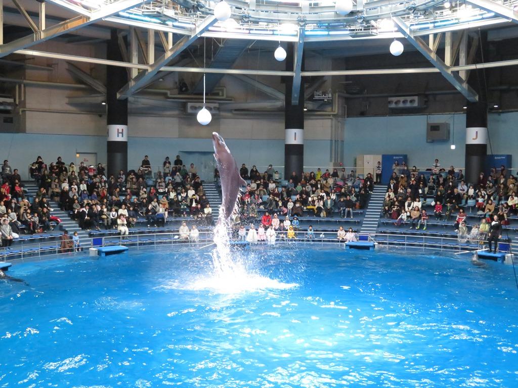 感動の水と光と音楽に大迫力のイルカたち!