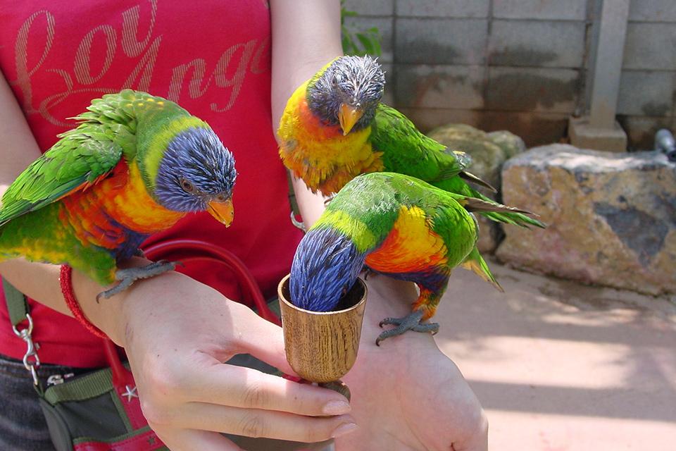 カラフルな鳥たちと遊ぼう!