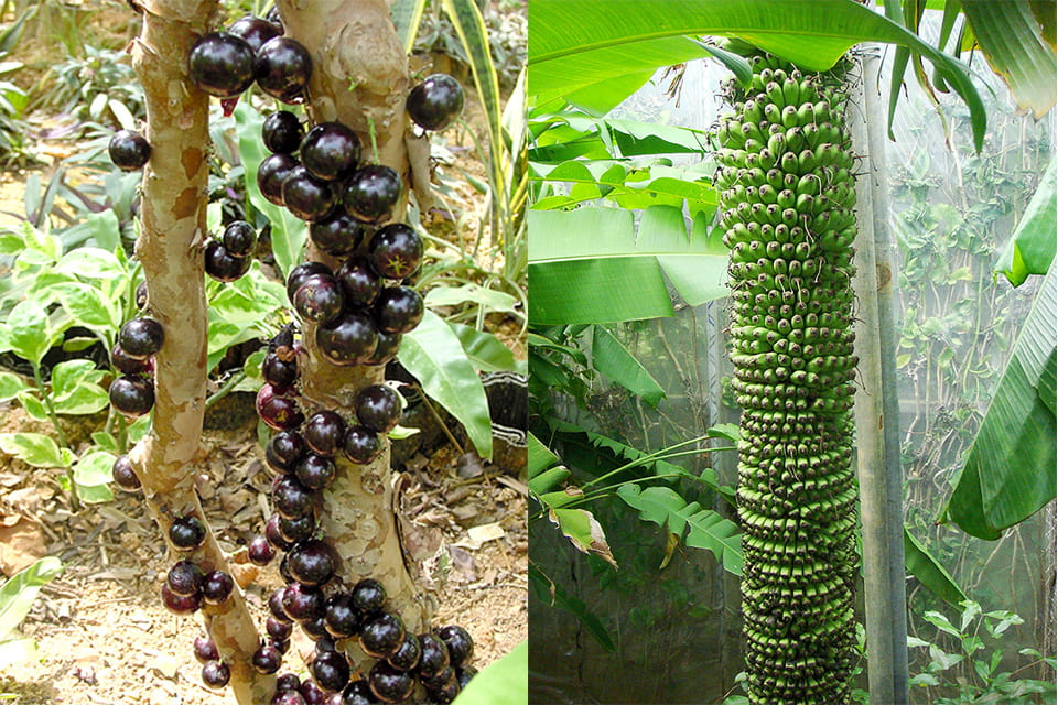 南国ムードいっぱいの熱帯果樹園
