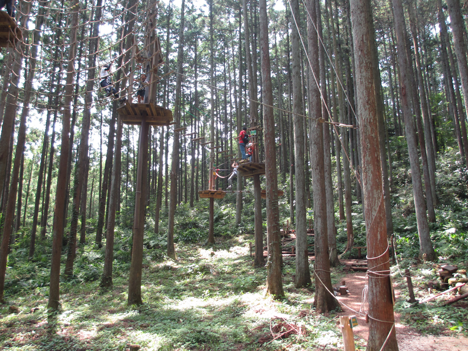 小田原の天然杉の森の中に築かれた日本最大のコース