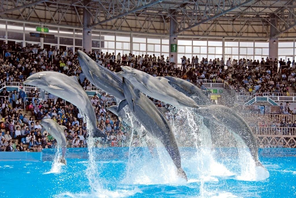 水族館、サファリパーク、遊園地ぜんぶ楽しめる!