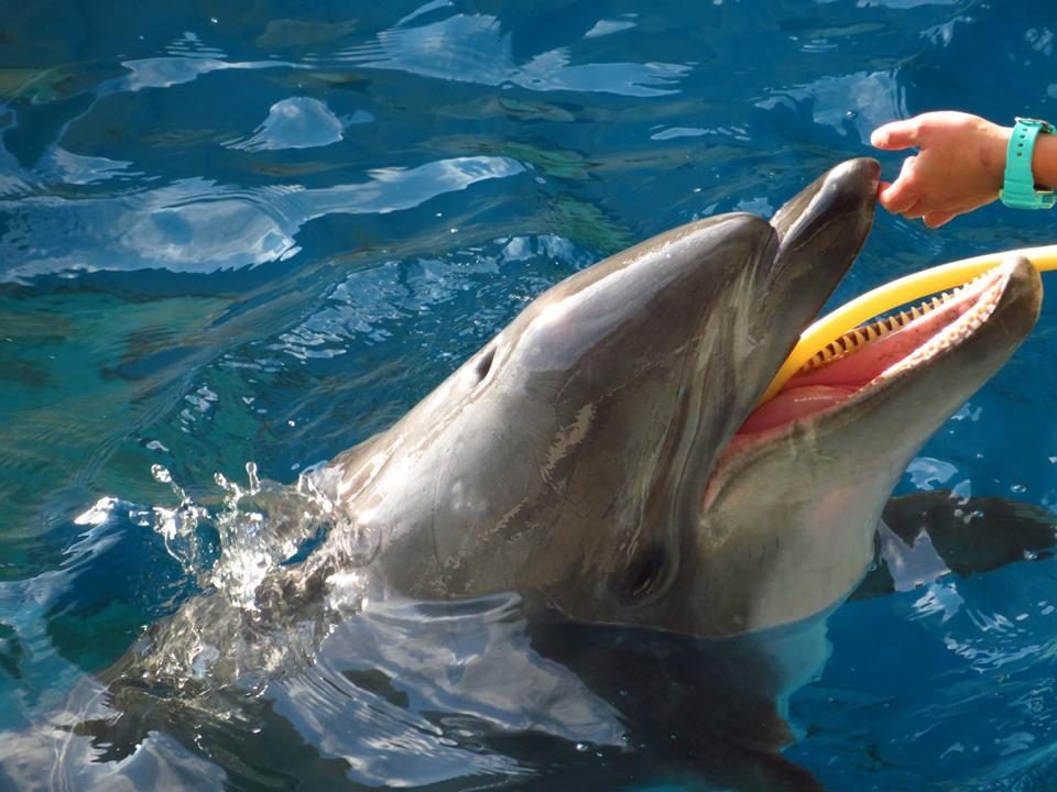 シロイルカのタッチや生きもの観察で、海の生物に関心を高める体験