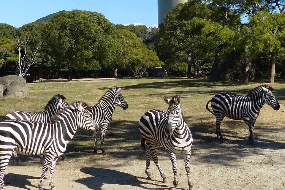 近くで観察!!ふれあって体験!!動物たちを身近に感じられる動物園ゾーン