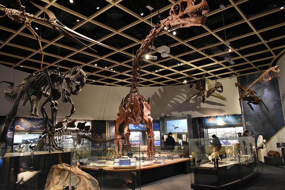 おおきな恐竜がお出迎え 自然史博物館