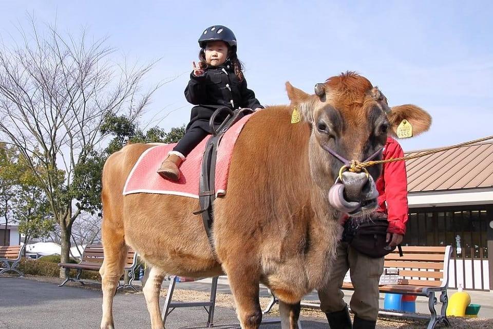 乗馬体験で馬との素敵なふれあいを!