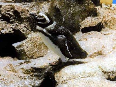 すみだ水族館のアイドル!ペンギンゾーンなど、ワクワクの5Fフロア