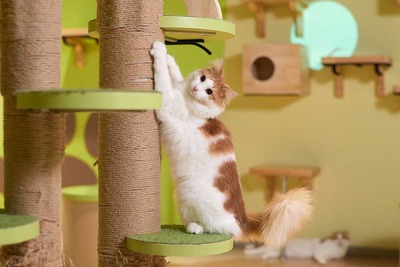 癒しをテーマにした猫たちと触れ合えるコーナー「キャットパラダイス」