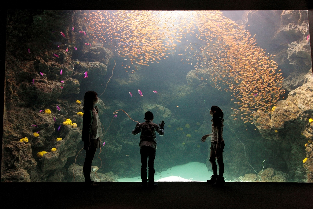提供:サンゴ礁の海