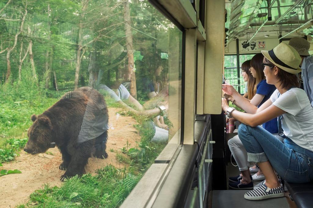 【ベア・マウンテン】大迫力のヒグマを間近で体験
