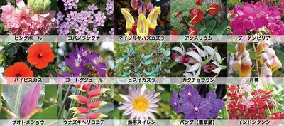 季節によって変わる園内の花